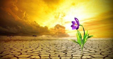 Términos y mentalidad: Resiliencia.